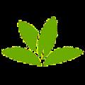 معرفی PlantNet؛ اپلیکیشنی برای شناسایی گیاهان از طریق گرفتن عکس